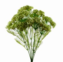 Artificial Queen Anne Lace x 9 Stems Green