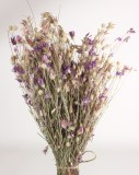 Dried Siskiyou Lilac 150gr
