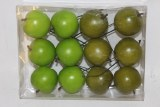 Green two tone apples on wire 5cm x 12