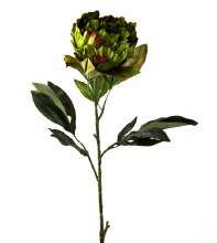 Artificial Peony Flower Long Stem Green/ Red