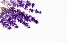 Florist Cards Small Lavender x 50Pcs