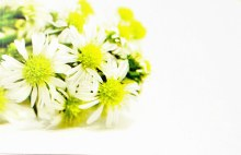 Florist Cards Small Wild Daisy x 50pcs