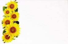 Florist Cards Small Sunflower x 50pcs