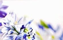 Florist Cards Small Blue x 50pcs