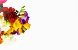 Florist Cards Small Freesia x 50pcs