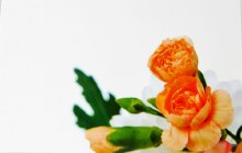 Florist Cards Small Orange x 50Pcs