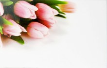 Florist Gift Cards Small Tulip x 50pcs