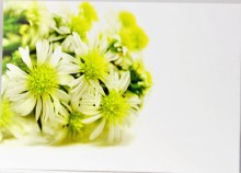 Florist Cards Wild Daisy Large x 9pcs