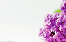 Florist Cards Small Purple Blossom x 50pcs