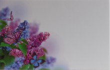 Florist Cards Small Purple Butterfly x 50