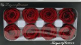 Preserved Rose Heads x 8 Red