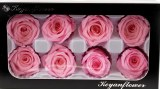 Preserved Rose Heads x 8 Pink
