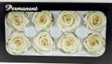 Preserved Rose Heads x 8 Ivory