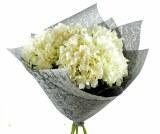 Florist Wrap Fantasia 75cm x 10yds Grey