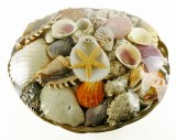 Decorative Shells In Basket 12""