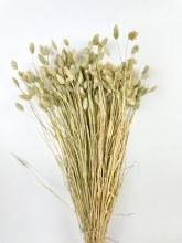 Dried Phalaris Natural