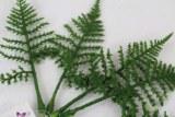 Artificial Fern Leaf Small x 6