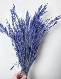 Bromus Macrostachys Blue
