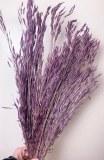 Bromus Macrostachys Purple