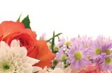 Packet of 50 bouquet florist gift card