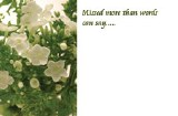 Packet of 50 Missed more than words can say florist cards