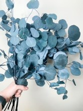 Eucalyptus Populus Blue/ Grey