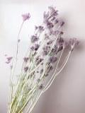 Dried Flower Finocchio Lavender 100g