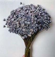 Dried Glixia Grey 100gr