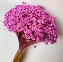 Dried Glixia Pink 100gr