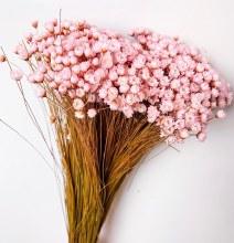Dried Glixia Light Pink 100gr