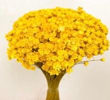 Dried Glixia Yellow 100g