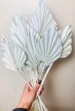 Dried Palmspear White Pearl x 10 pcs 45cm Approx.