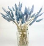 LAGURUS BUNDLE BLUE/GREY