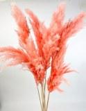 Pampas Stems Pink x 6