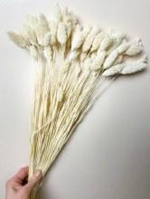Dried Phalaris Bleached