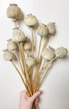 Wild Poppy Bunch