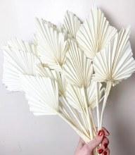 Dried Palmspear Bleached x 15