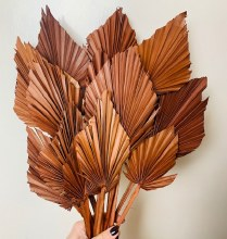 Dried Palmspear Brown x 15 45cm approx