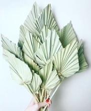Dried Palmspear x 20 Natural