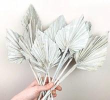 Dried Palmspear Stonewash White