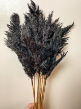Dried Wild Plume x 10 Black 75cm