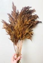 Dried Wild Plume Brown x 10