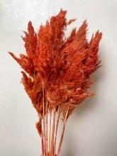 Dried Wild Plume Stems x 10 Red 75cm