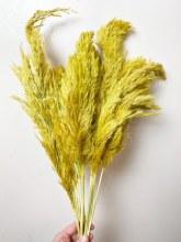 Dried Wild Plume Stems x 10 Yellow 75cm