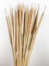Dried Typha Natural
