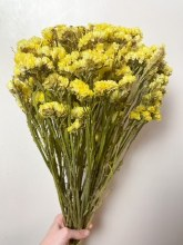 Dried Statice Flowers Yellow
