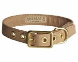 ANIMALS IN CHARGE LATTE + BRASS ALL WEATHER COLLAR: MEDIUM
