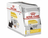 ROYAL CANIN DOG DERMACOMFORT LOAF 12X85G