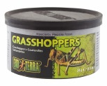 EXO TERRA WILD MALE GRASSHOPPERS 34GM - SMALL