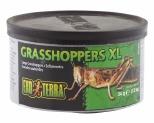 EXO TERRA WILD GRASSHOPPERS 34GM - XLARGE